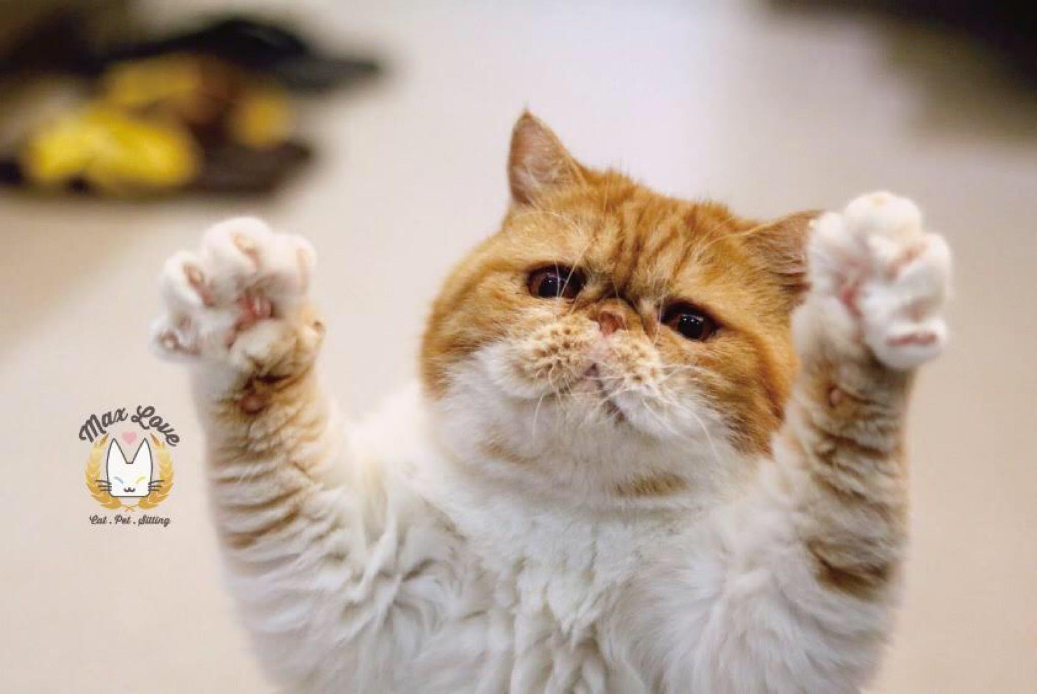 貓星人, 寵物保姆