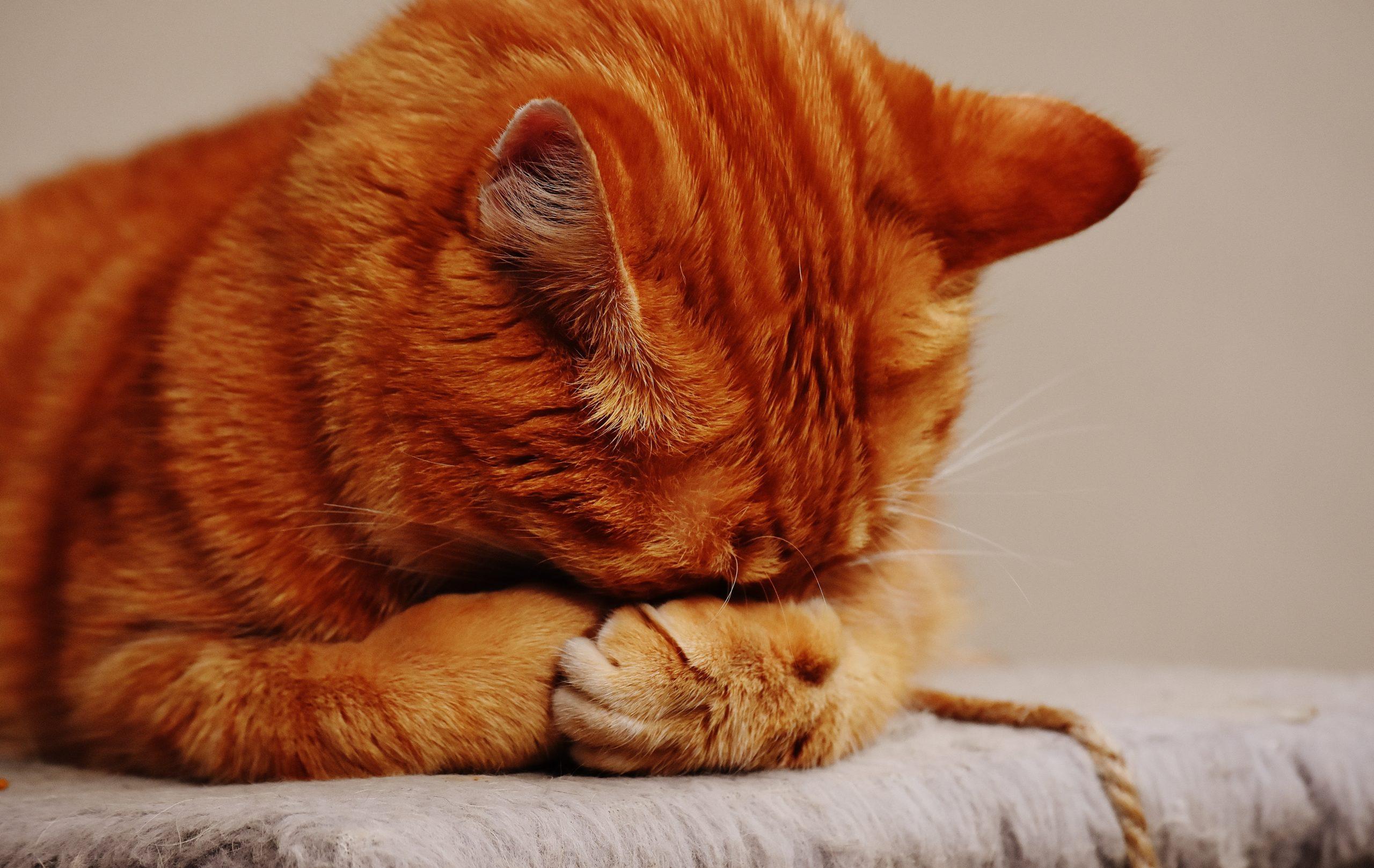 貓貓情緒緊張